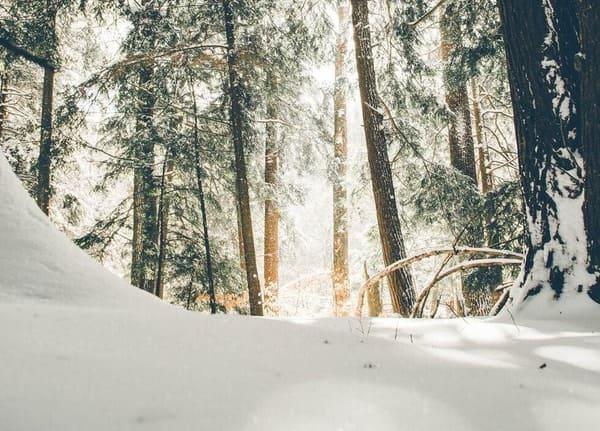 Actividades adaptadas en la nieve por grupo oelcun